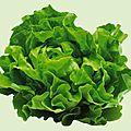 14 fevrier - tous les légumes feuilles peuvent être semés