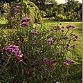 Windows-Live-Writer/jardin_D005/DSCF3840_thumb