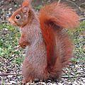 Le resto de l'écureuil