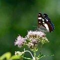 5. Insectes et bêbêtes en tous genres