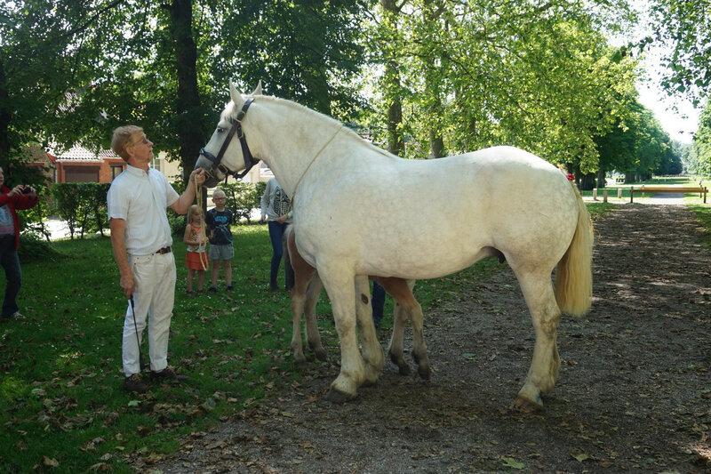 Dalila d'Avesnes - Local de Rue (80) - 3 Juin 2018 - 3e (Suitées) [Photo Agathe SHB]