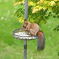 Coquin d'écureuils...