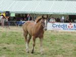 Gazelle du Clocher (pouliche de Rose de Tachincourt et Vagabond de Campigneu) - 24 Juillet 2016 - National Boulonnais