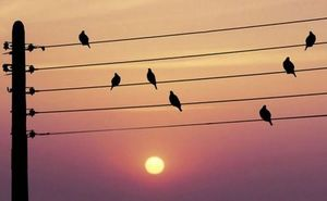 humour_musique