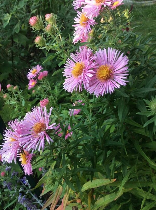 aster2