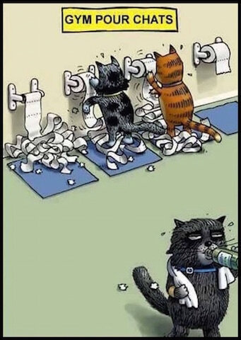 chats gym