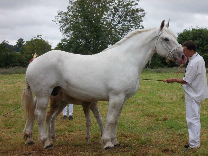 Atalante de l'Equipay - 21 Juin 2016 - Concours d'élevage local - Bonningues les Ardres - 1ere (Suitées)