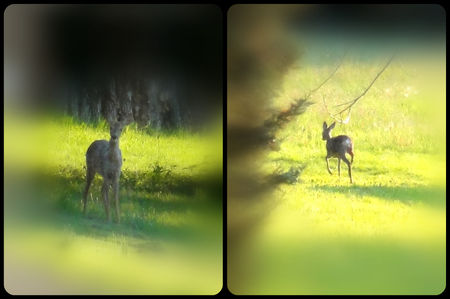 Biche_Collage