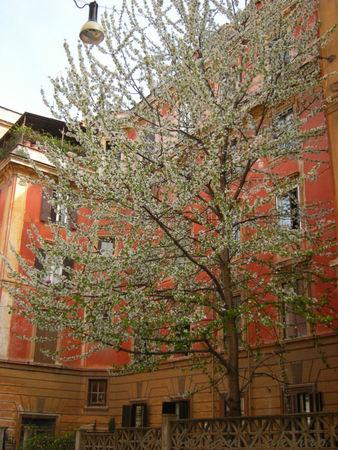 Rome_avril_2009_096_copie