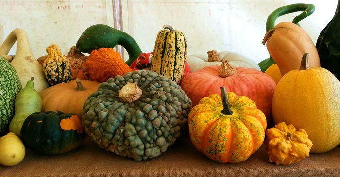 courge3