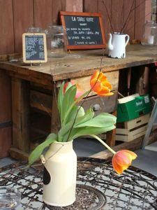 LTVmars tulipe