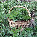 Reconnaitre les plantes sauvages alimentaires et médicinales