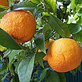 Les huiles essentielles et essence du citrus aurantiumssp.amara
