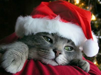 normal_chat-pere-noel