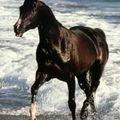 Quelques photos de chevaux...