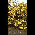 mimosa février 17