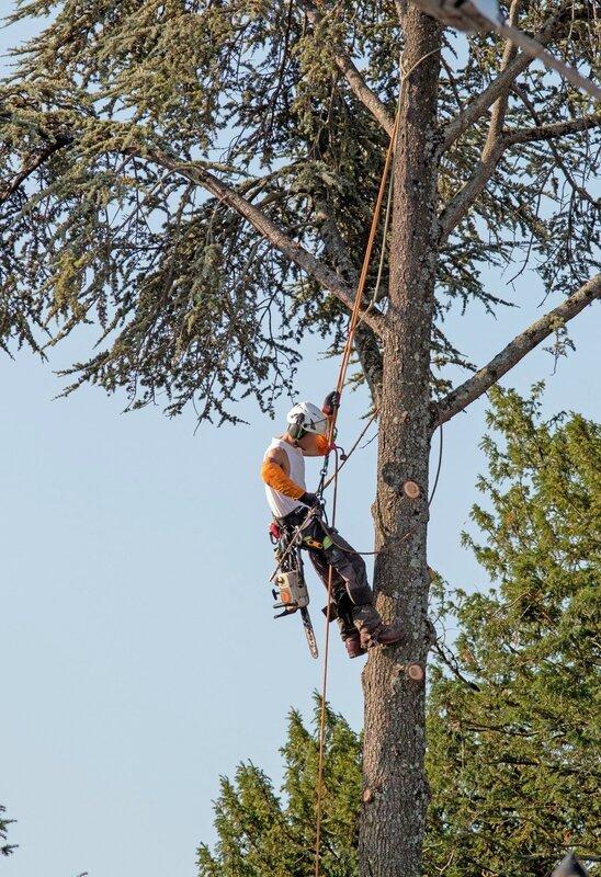 ville worker tronçonnage arbre 1 300816 avec lou