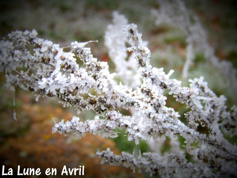 Givre2