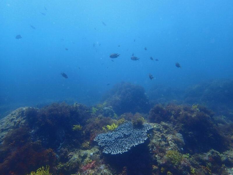 1151696-jpg_300ppm-seascape7jpg