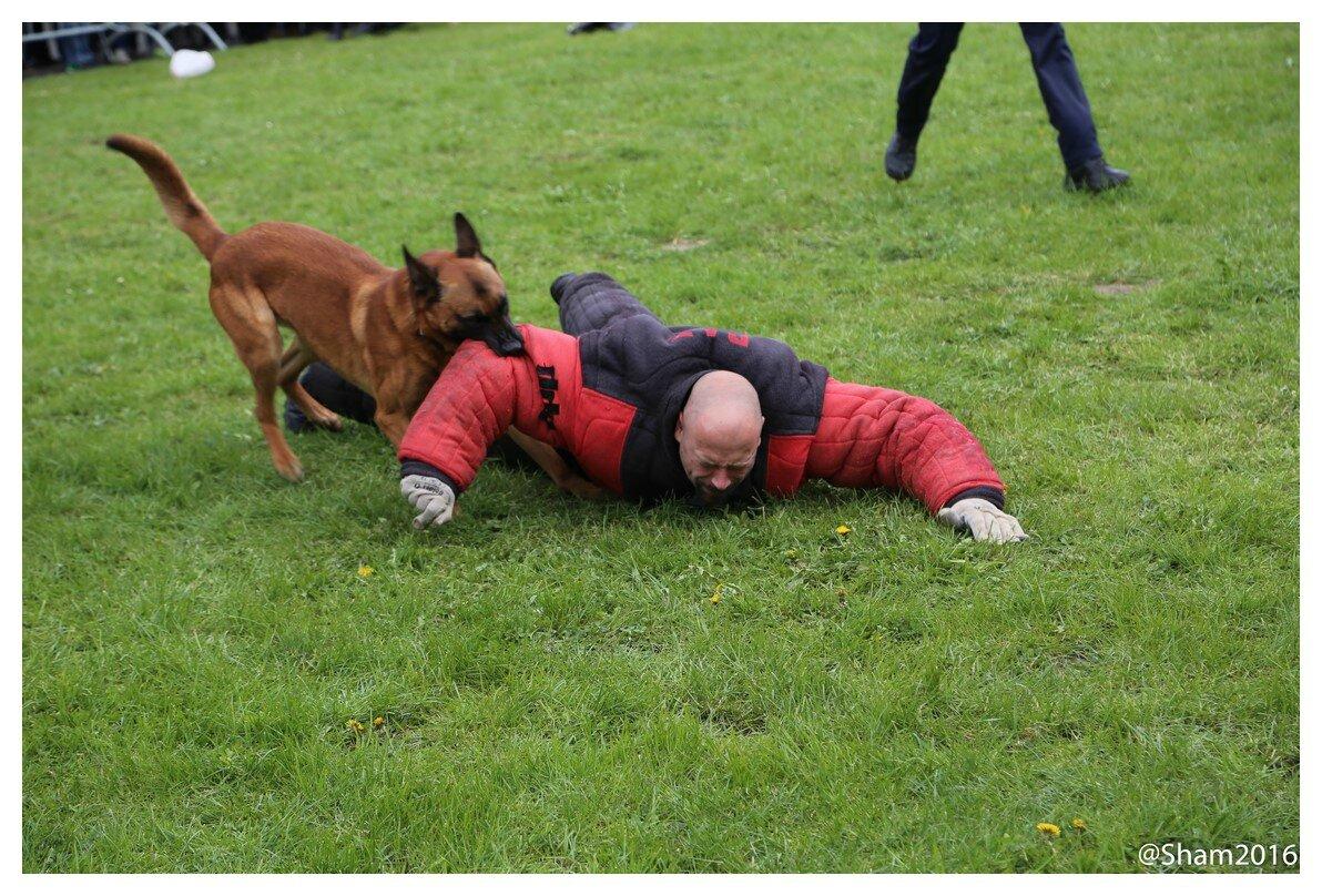 Démonstrations des brigades canines des zones de police de Comines – Mouscron – Menin