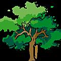 Halte au massacre des arbres d'alignement! article publie par reporterre
