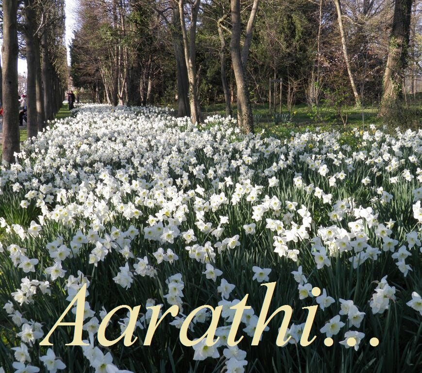 A Sea of Daffodils @ Parc de Sceaux