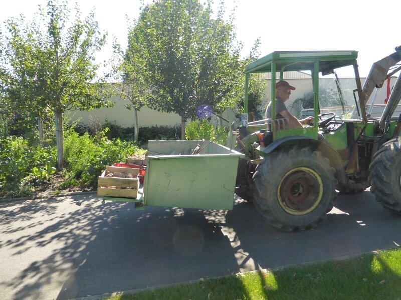 3-tracteur et récolte de pommes de terre (6)