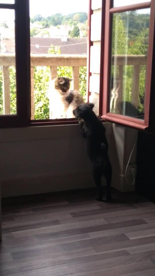 Zlatan et le chat