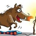 Une leçon pour tous les flingueurs d'animaux…!