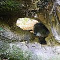 Toujours dans le bois, avec mon chien