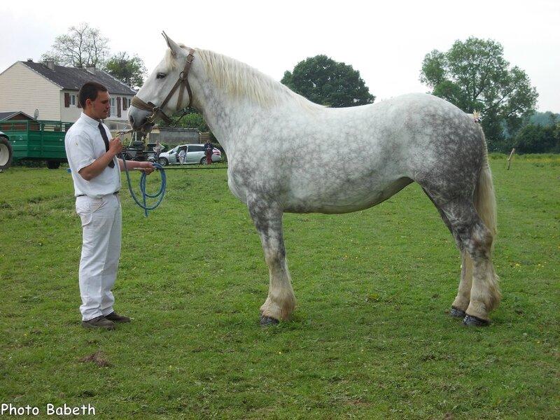 Victoire de Bernavil - Concours élevage local - Bernaville (80) - 1er juin 2014 - 2e