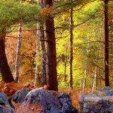 Les rochers d'Angennes en forêt de Rambouillet