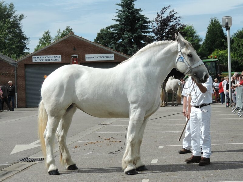 Clochette 20 - 21 Juin 2016 - Concours d'élevage local - Thérouanne - 2e (Non Suitées)