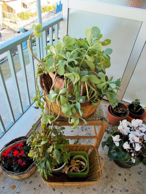 terrasse nouvelle version plantes et fleurs