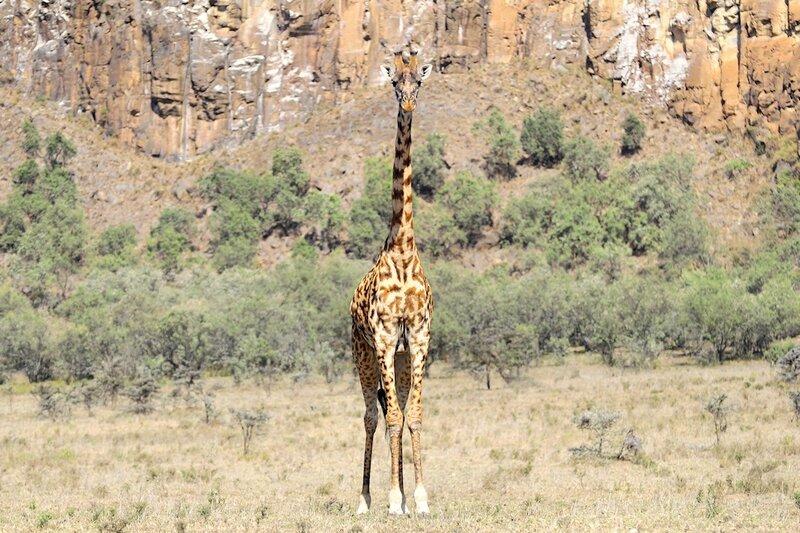 Kenya (320)