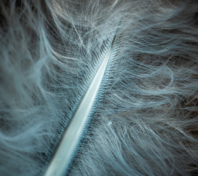 macro-feather-close-up-fur-macro-photography-whiskers-1428999-pxhere
