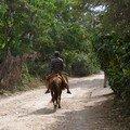 quelques images de la vie en Haiti- photos Sandrine Thomas