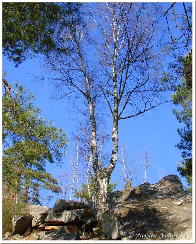 La forêt de Rambouillet vue sous un autre angle (2)
