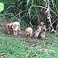 Portée de chiots jetée dans les cannes