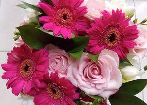 Roses_p_les__fresia_blanc__germini_rose_soutenu__juillet_2013