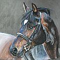 Cheval Hanovrien, pastel sec sur pastelmat 30 x 40 cm