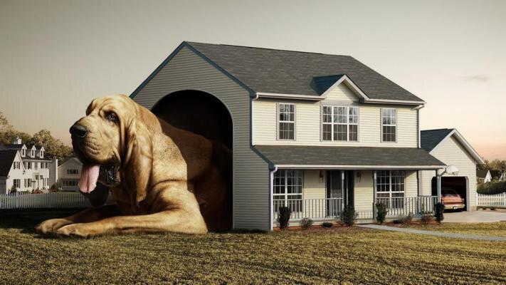 niche-refuser-entrer-utiliser-pourquoi-solution-explication-chien-comportement-canin-compagnie-animal-animaux-animogen-1