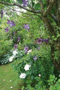 Omonville et le jardin des près 244