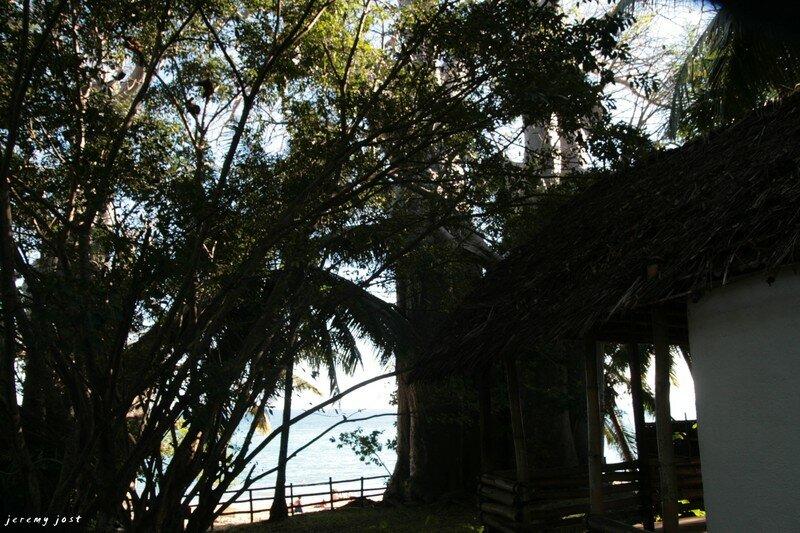 case baobas et lémuriens