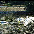 Lac Cygnes 01101517