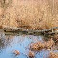barriere dans le marais