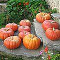 Récoltes d'automne