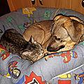 Lara et son copain Berlioz le chat