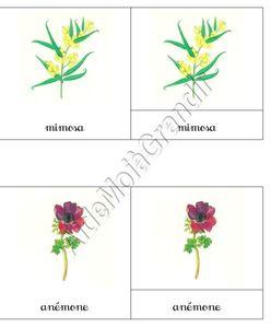 fleursamg