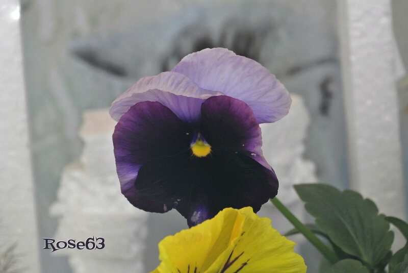_DSC6360